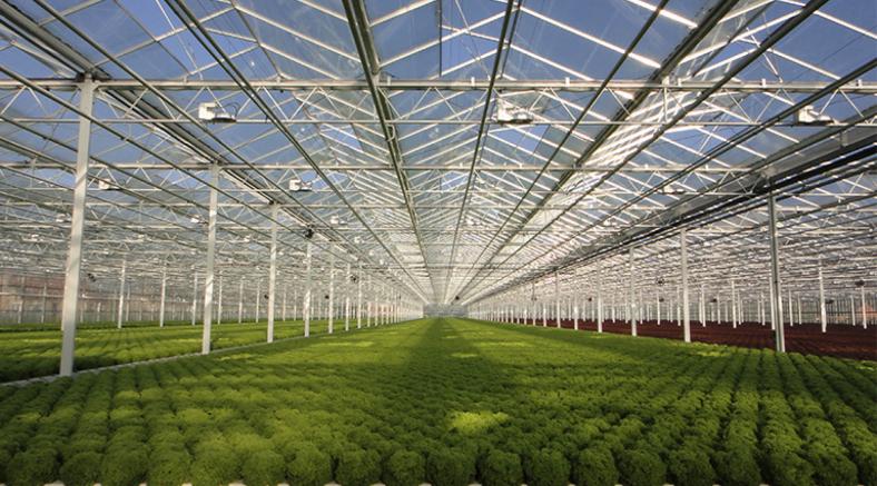 avag-website-dutch-greenhouses
