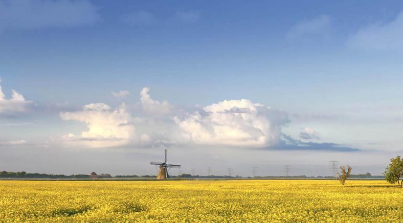 nederland-schoon-supporter